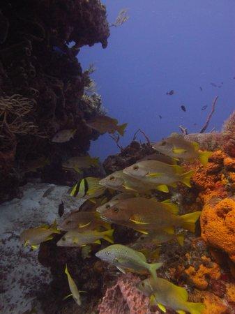 Santa Rosa Wall : Coral Formations