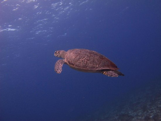 Another Turtle, out and about on the Santa Rosa Wall