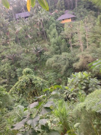 Graha Moding Villas: Forest view from balcony