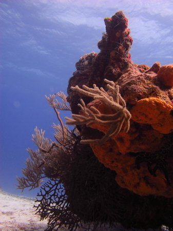 Yucab Reef : Coral