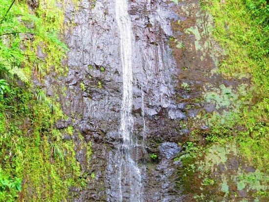 Manoa Falls: Manoa Waterfall