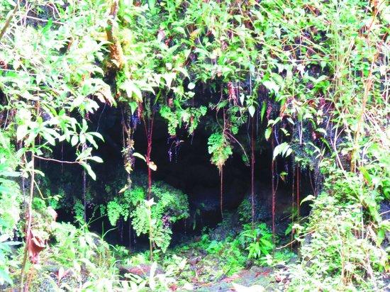 Manoa Falls: Cave