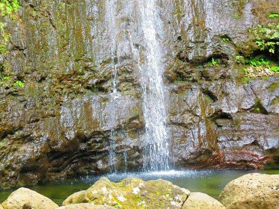 Manoa Falls: Falls