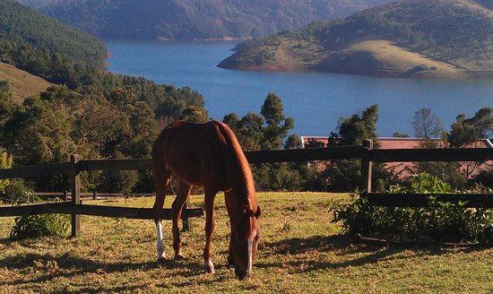 Destiny Farmstay: Horses grazing within the farm