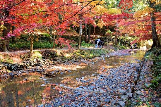 Mori-machi, Japón: 川の上流
