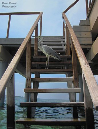 Adaaran Prestige Vadoo: Private stairway to reef.
