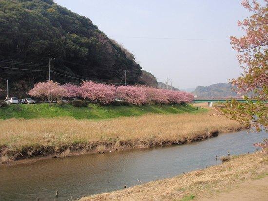 Kagiya : 旅館の近くの桜並木