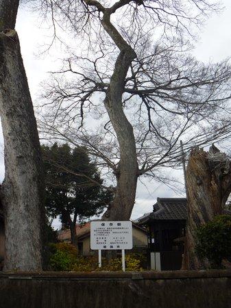 Saeki Shrine