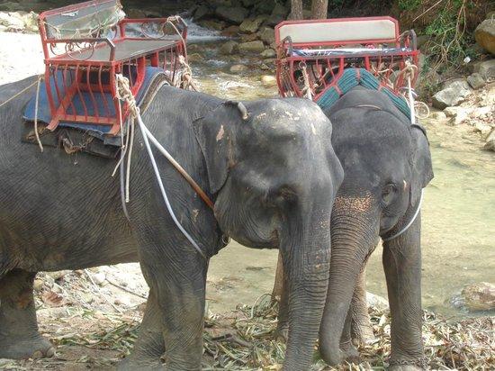 Anda Adventure - Day Tours: Elephants!