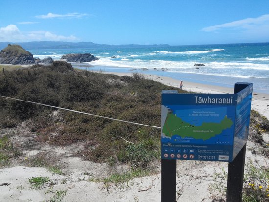 Tawharanui Regional Park: beach 2