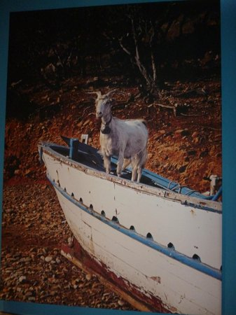 the goat in the boat picture of the goat in the boat cowes