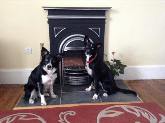Lizard Lighthouse Cottages: Our dogs in the living room