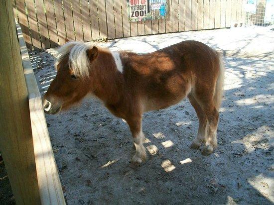 Dickerson Park Zoo Pony