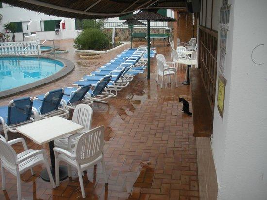 Apartments Alondras Park: gato sarnoso en la piscina