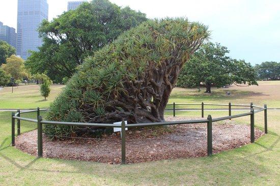 Royal Botanic Gardens: Dragon's Blood fall