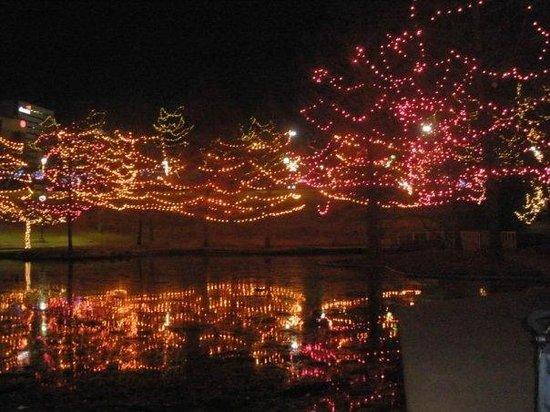 myriad botanical gardens christmas lights