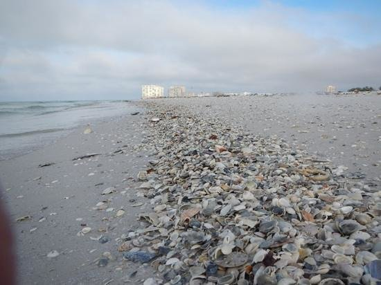 Reel Kind Fishing and Tours : line of shells with Marco Island in the background