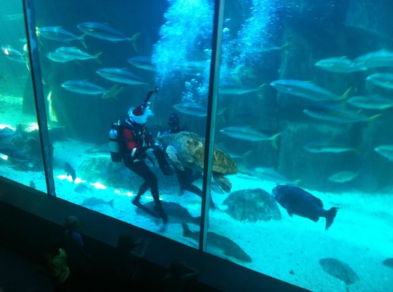 Feeding In The Predator Tank Picture Of Two Oceans