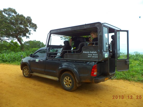 Yala Panchi Safari Jeep Tours