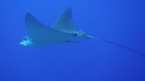 Dive House: day 1 Eagle Rays