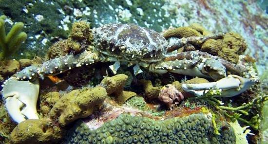 Dive House: Big Crabs!