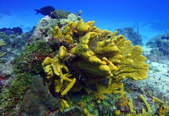 Dive House: great coral formations and color