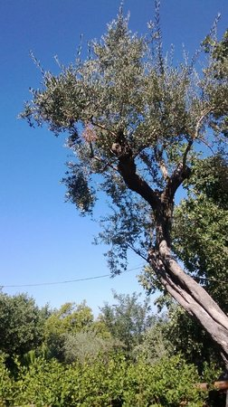 Villaggio Santa Fortunata Campogaio: vue du bungalow