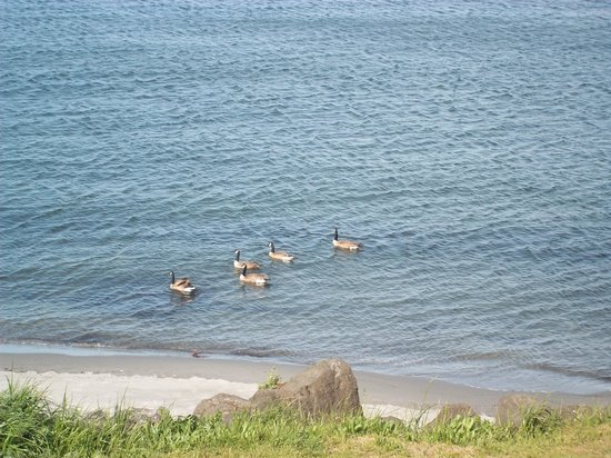 Red Lion Hotel Port Angeles: watching wildfowl from the room