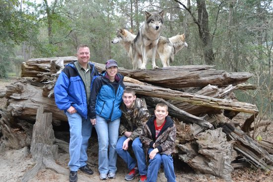 Seacrest Wolf Preserve: One of the photo ops you get with the animals