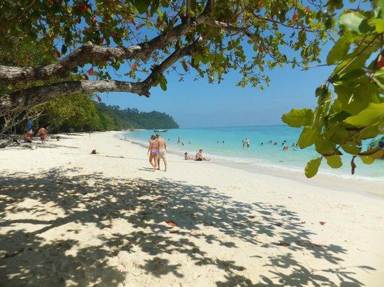 Ko Rok Nok: beach on koh rok
