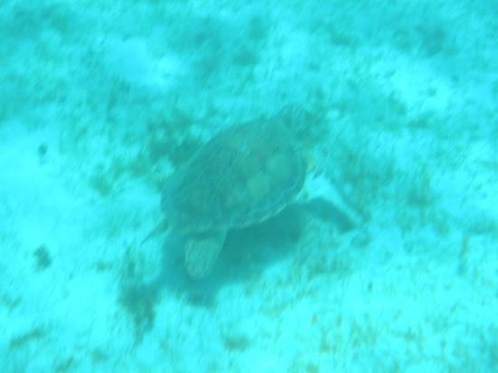 Palm Island: incontro con le giganti tartarughe marine