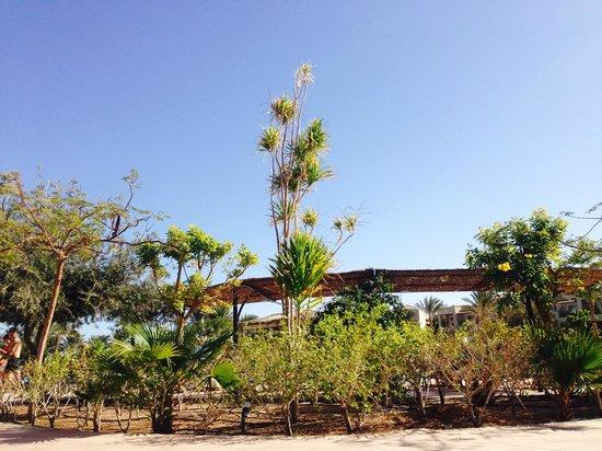 Jaz Mirabel Beach : Hotel sunbathing views