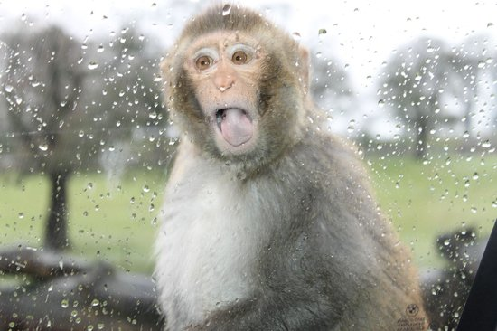 Warminster, UK: its wet out here, let me in...