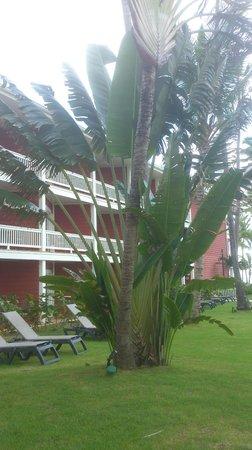 Barcelo Bavaro Beach - Adults Only: les chambres du voyageur