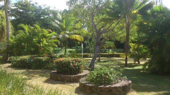 Barcelo Bavaro Beach - Adults Only: des jardins de l'hotel
