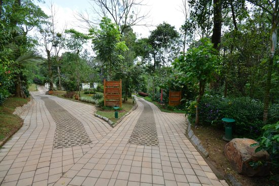 The Windflower Resort and Spa, Coorg: Road leading to the Room/Suite/Villas