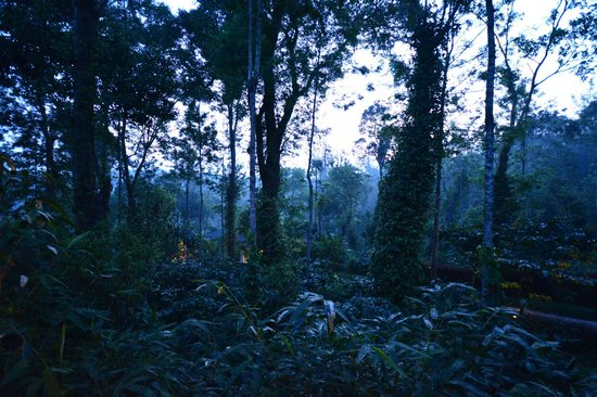 The Windflower Resort and Spa, Coorg: Twilight Hour View from the Balcony