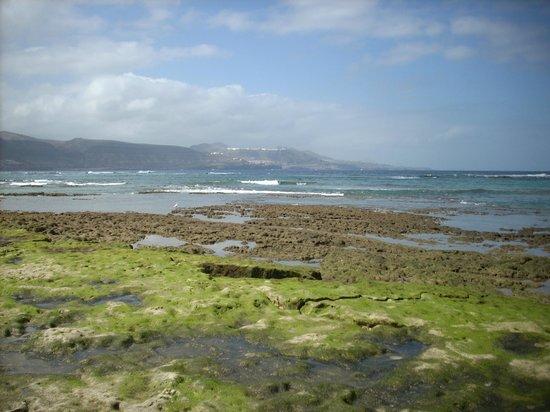 Playa de Las Canteras : scogli