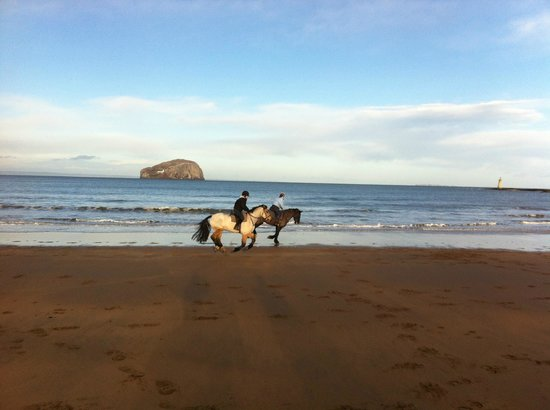 Seacliff Stables: On the beach
