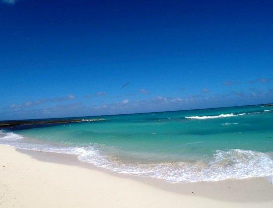 Melia Buenavista : Beach