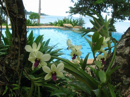 Sea View Resort & Spa Koh Chang: Орхидеи, Бассейн у пляжа