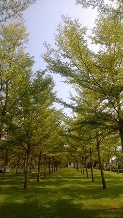 Sunray Village Resort: Garden