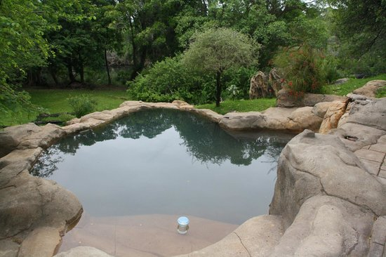 Blyde River Wilderness Lodge : Piscine 2