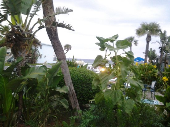 Daytona Shores Inn and Suites: Patio view