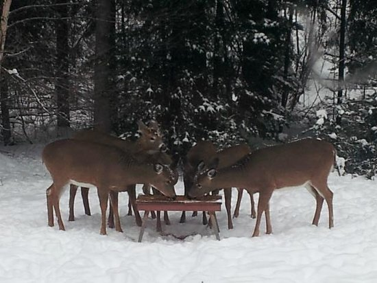 Spa Crystal-Inn B&B Mont Tremblant: Lunchtime with some friendly neighbors!