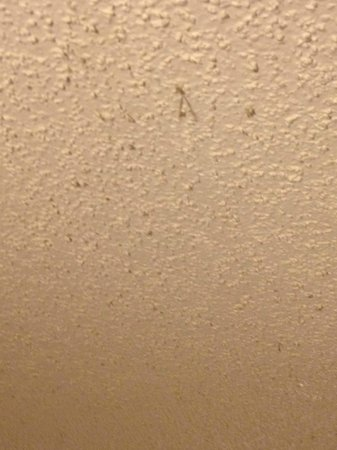 Ramada Odessa Near University of Texas Permian : Ceiling. Dust was hanging from the popcorn ceiling.
