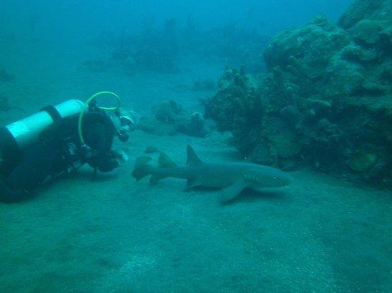 Saba Deep Dive Center: Divemaster Kayleigh and friend