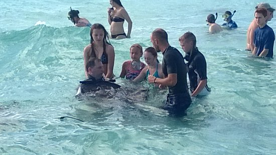 Red Sail Sports Grand Cayman : Not a bad morning out at Stingray City