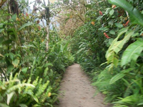 Inkaterra Machu Picchu Pueblo Hotel: Caminos con exhuberante vegetación que constituyen uno de los paseos dentro del hotel