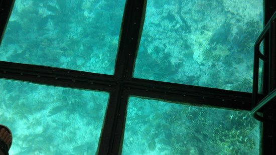 Molasses Reef: glass bottom boat view